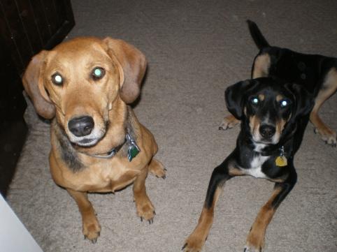 Lizzy & Jasper, 1-1