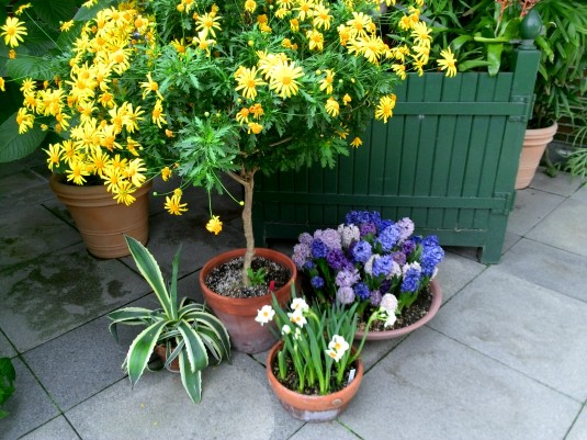 Yellow and purple flowers make me happy.